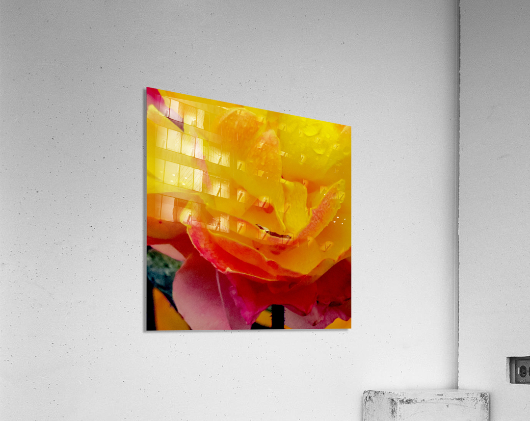 20181121 IMG 2710  Acrylic Print