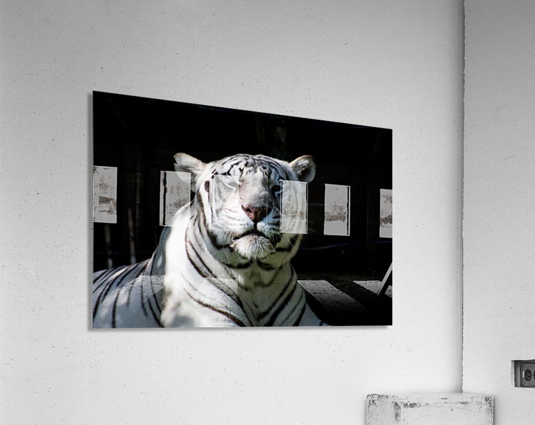 20181104 DSC 0151  3   Acrylic Print