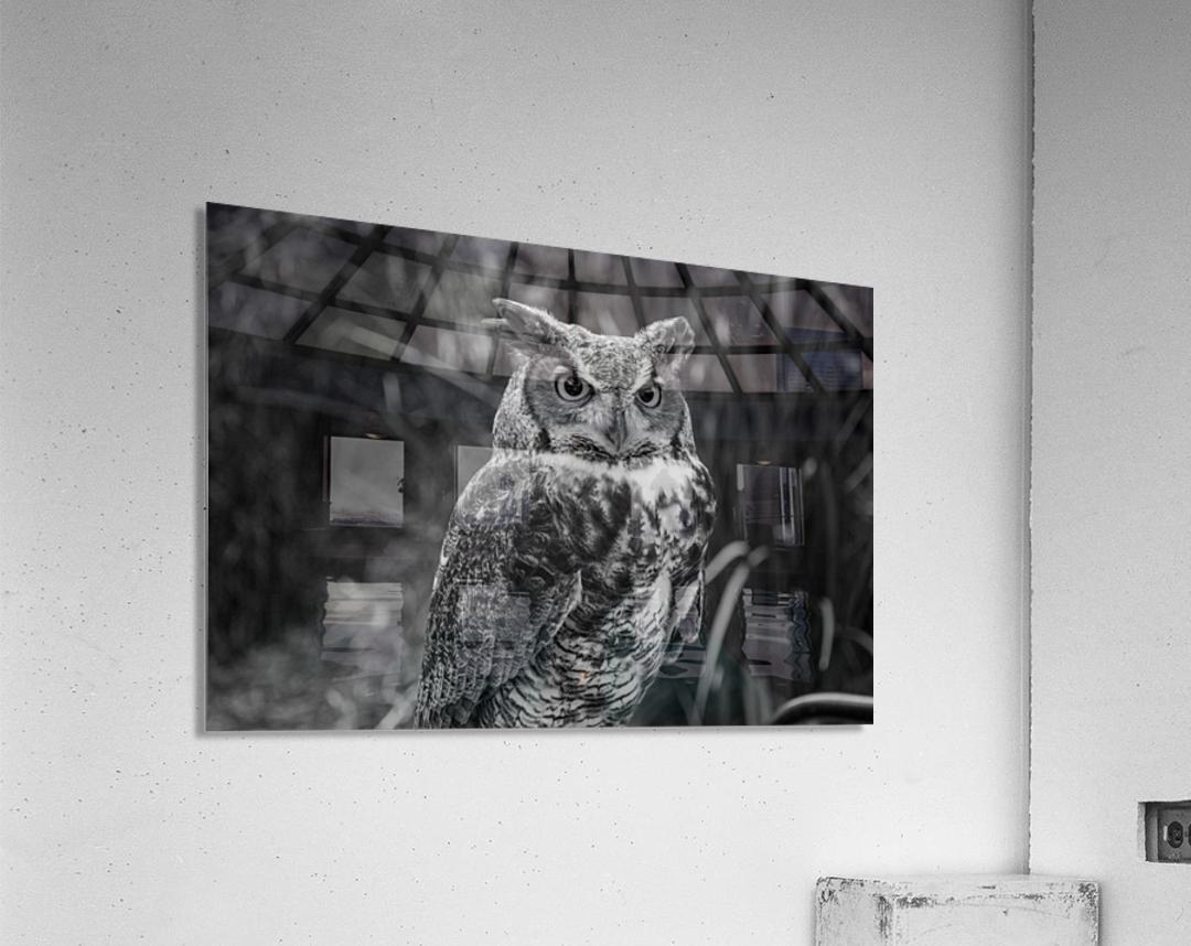 20181021 DSC 0154  2  1 2  Acrylic Print