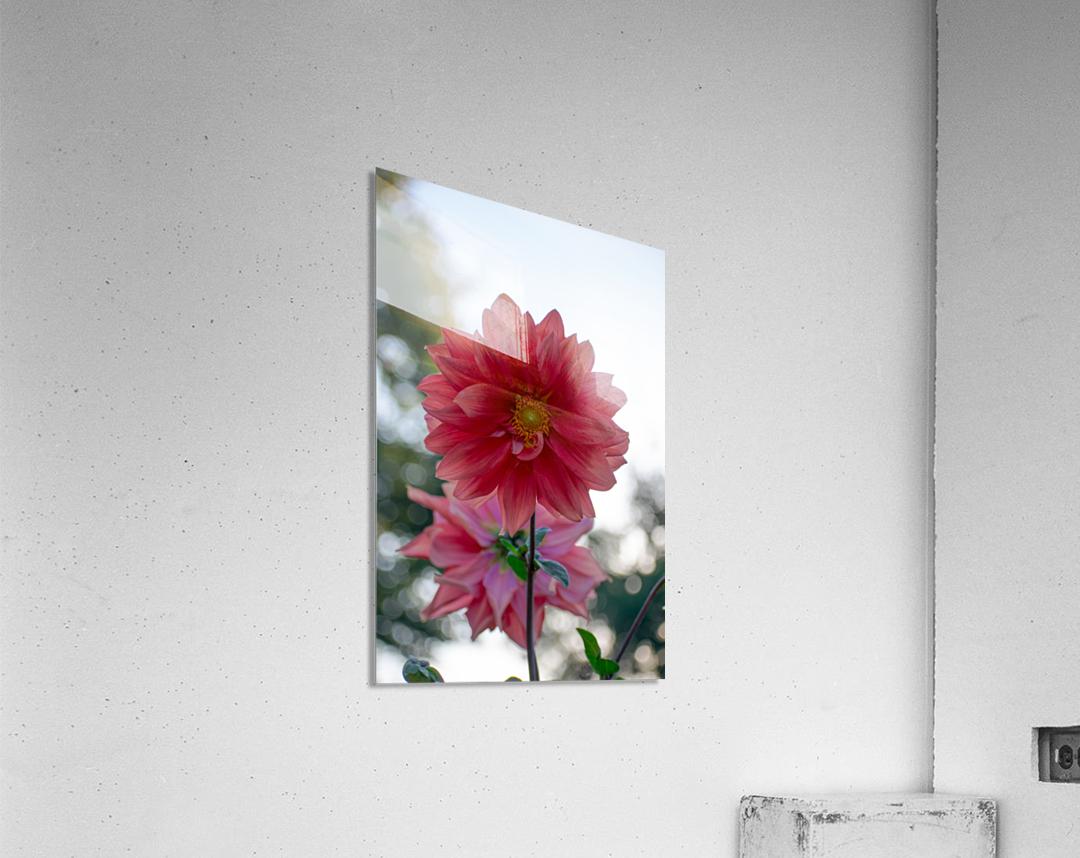 20181021 DSC 0039  2  2  Acrylic Print