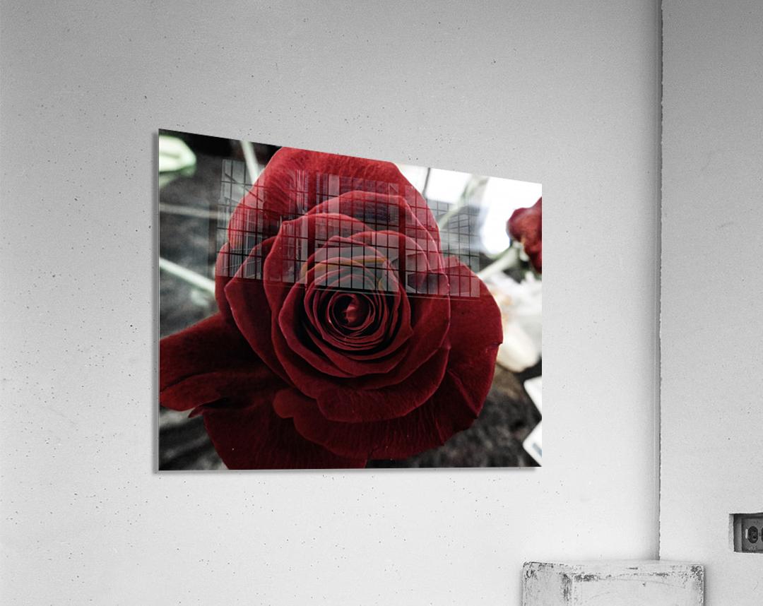 20181209 IMG 2803  Acrylic Print
