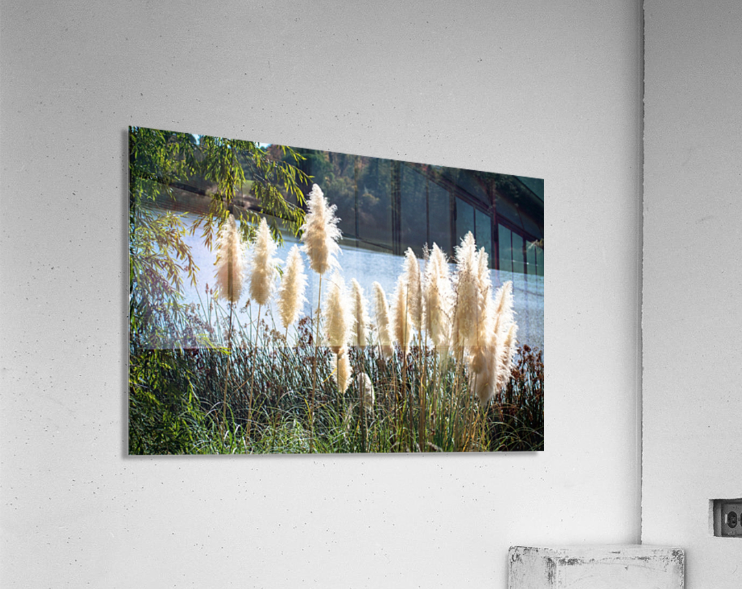 20181104 DSC 0282  3   Acrylic Print