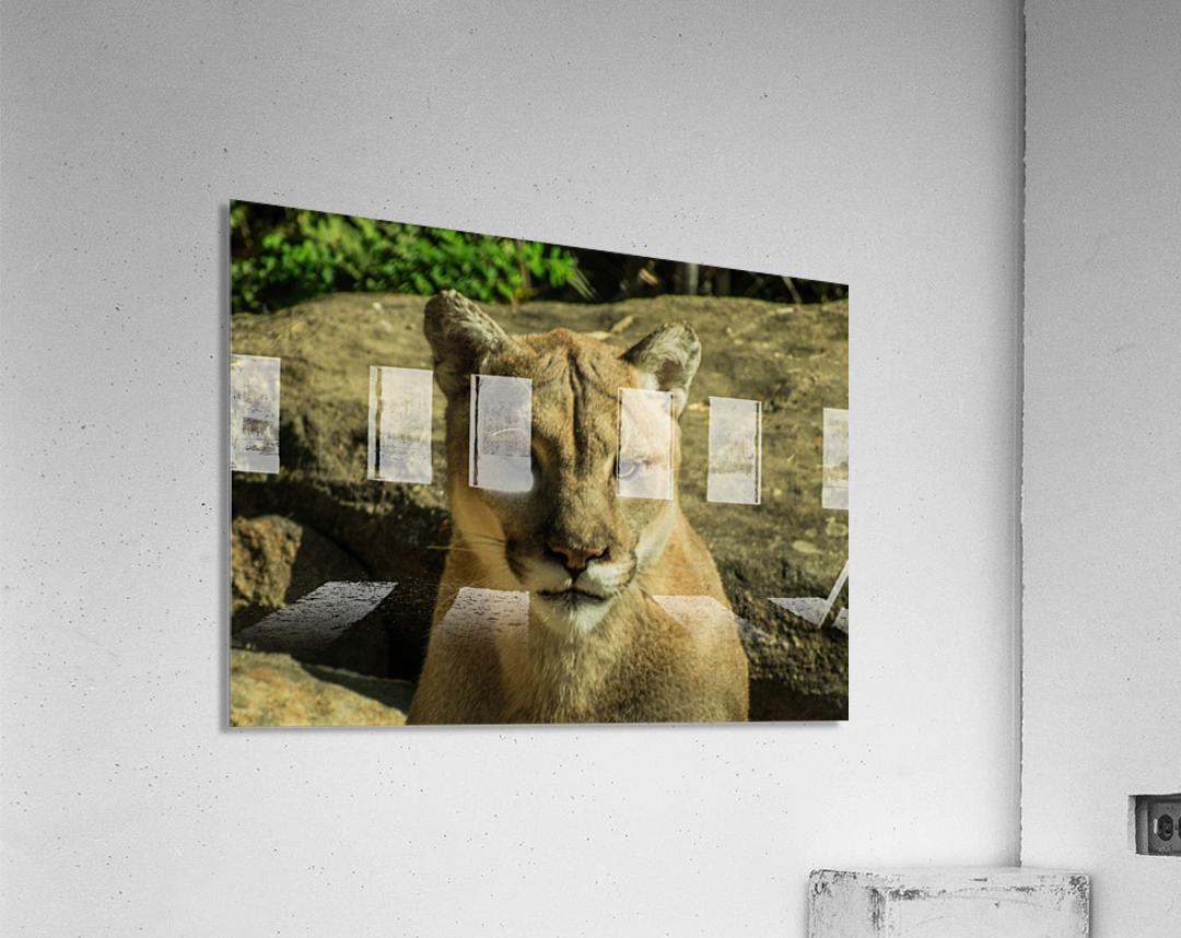20181104 DSC 0073  3  9  Acrylic Print