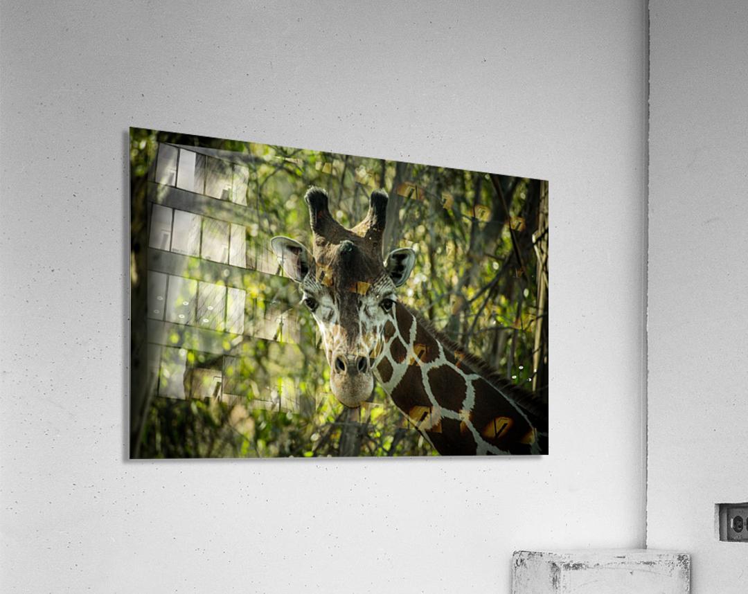 20181104 DSC 0191  3   Acrylic Print
