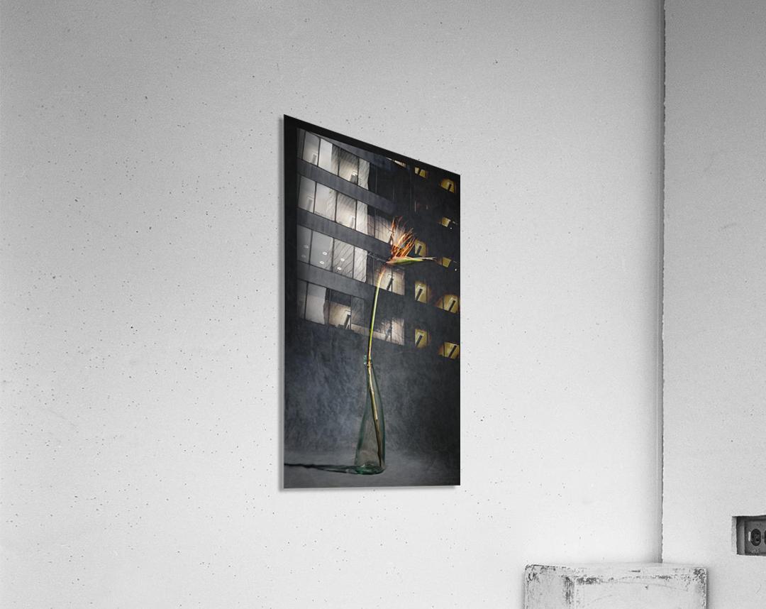 Etude Zen 3l  Acrylic Print