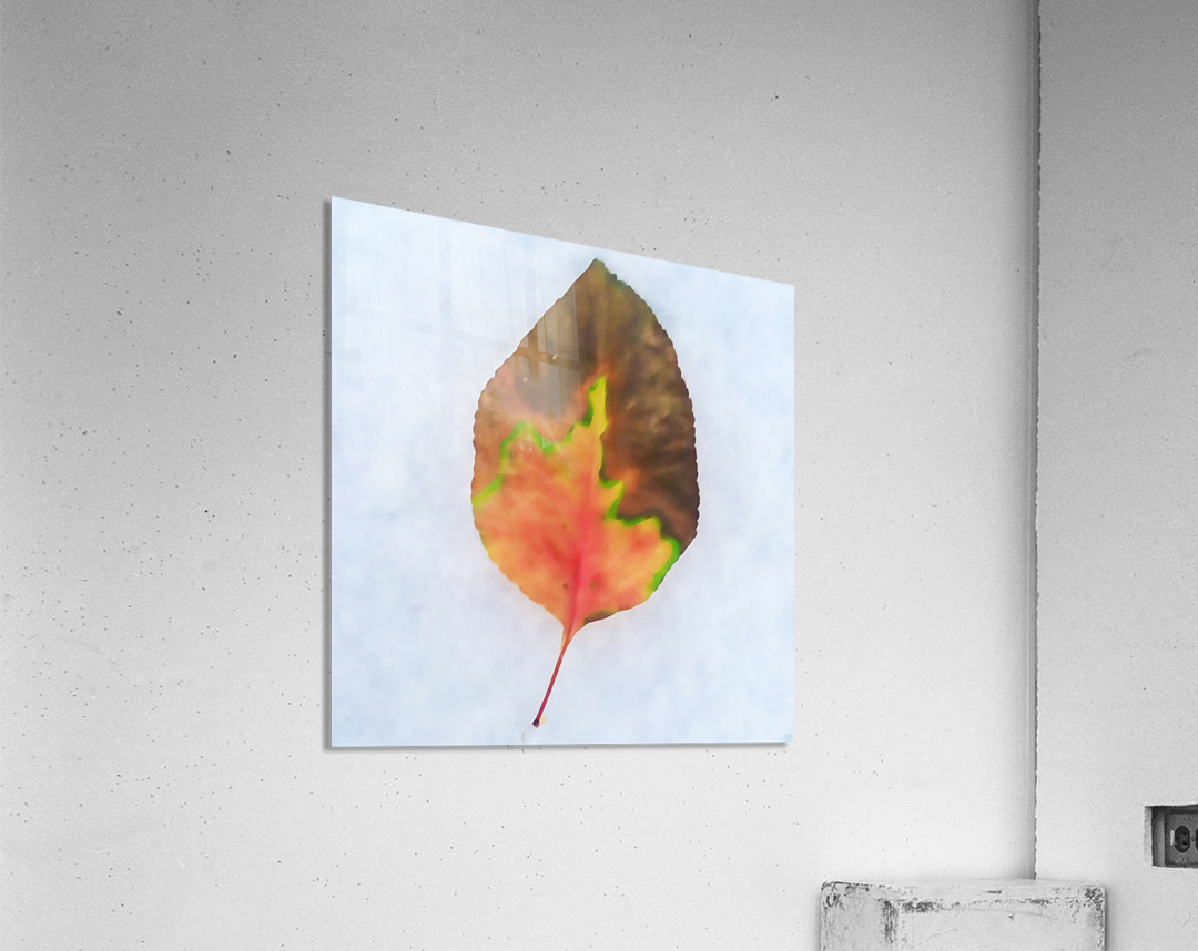 snow leaf  Acrylic Print
