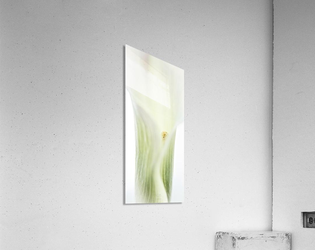 Aurore boreale 2  Acrylic Print