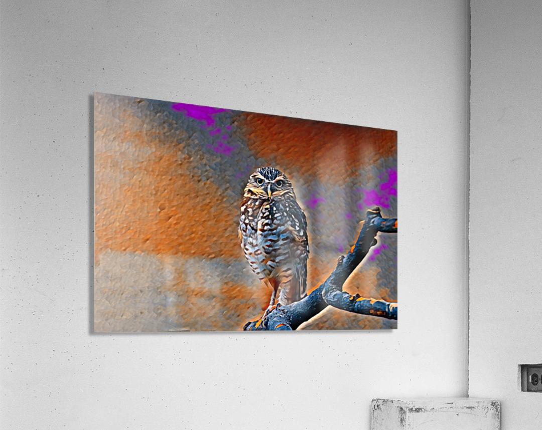 OWL - Stylized  Acrylic Print