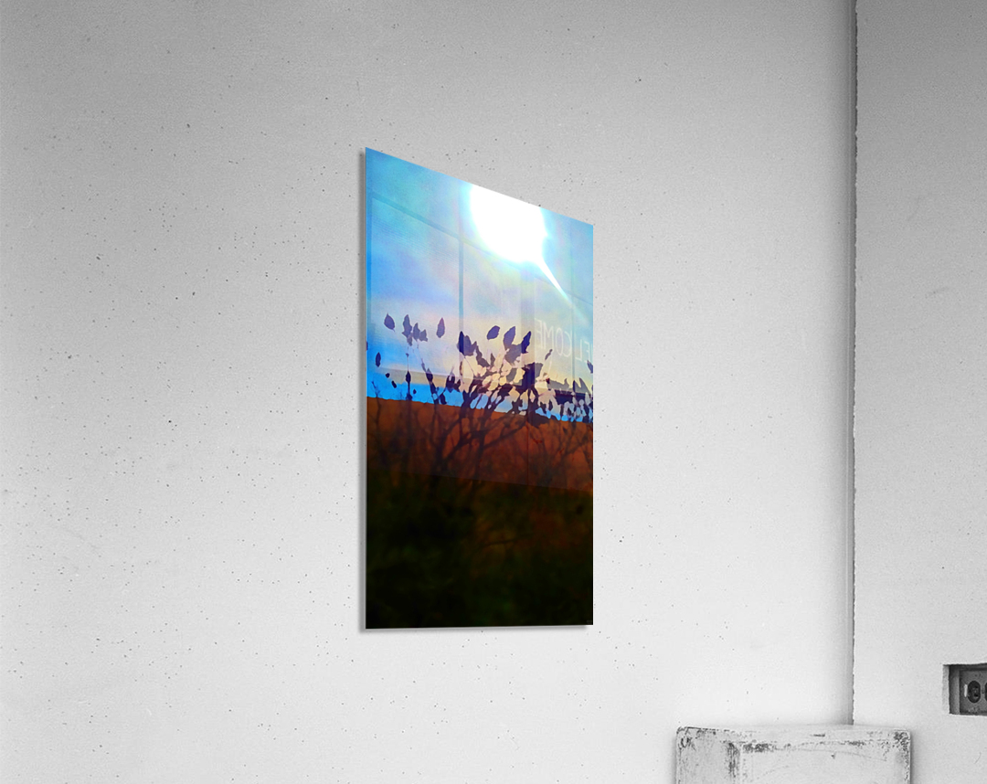 Mid Afternoon Beauty  Acrylic Print
