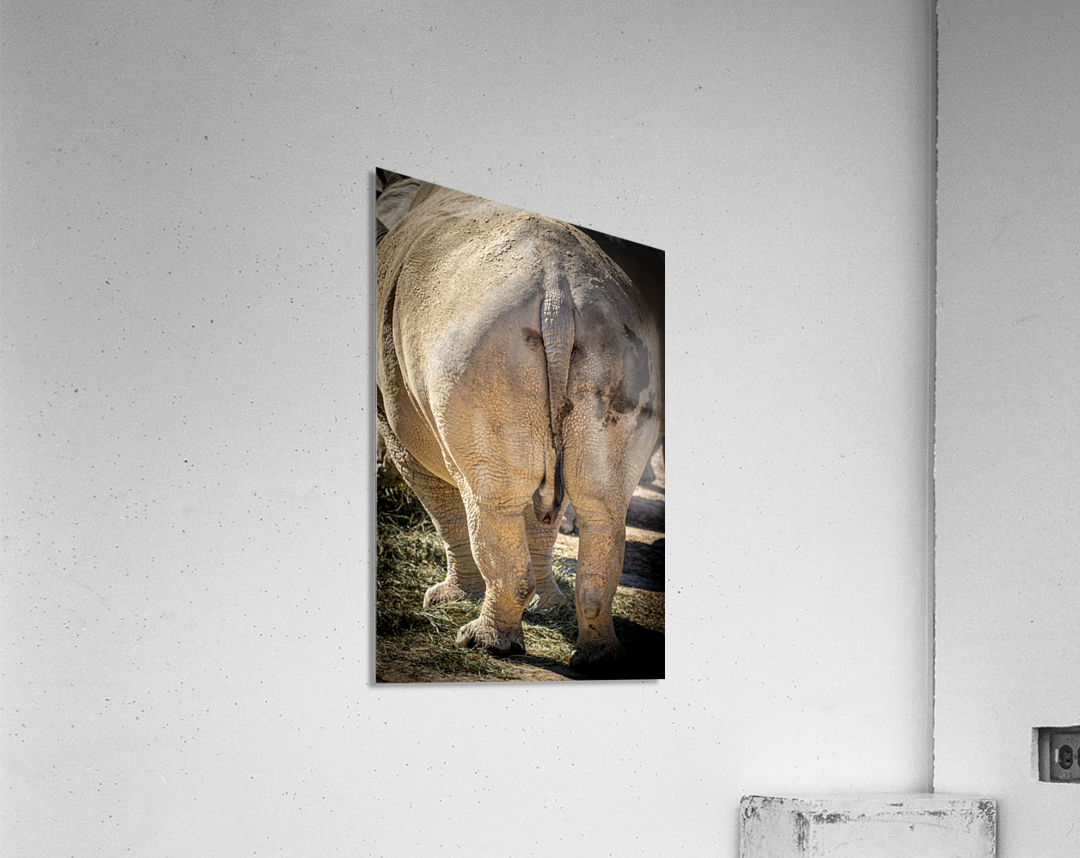 Rhinoceros 2  Acrylic Print