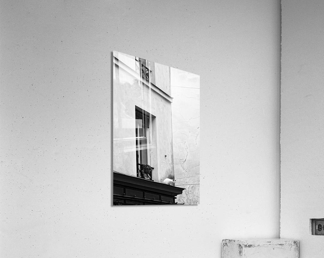 Paris cat  Impression acrylique