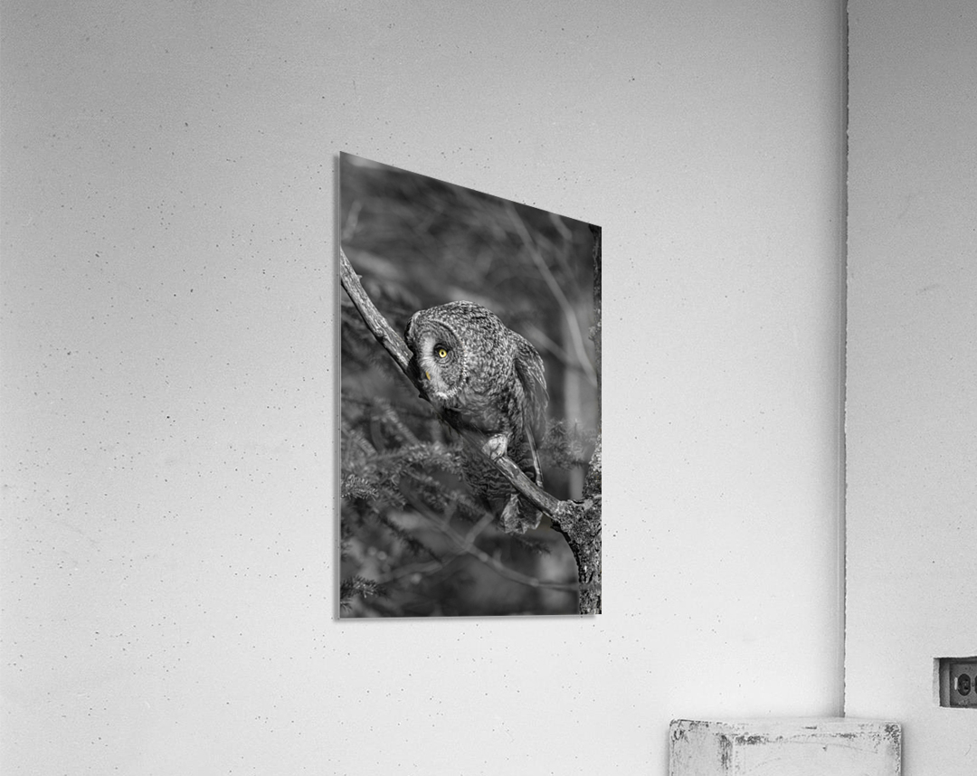 Pounce  Acrylic Print
