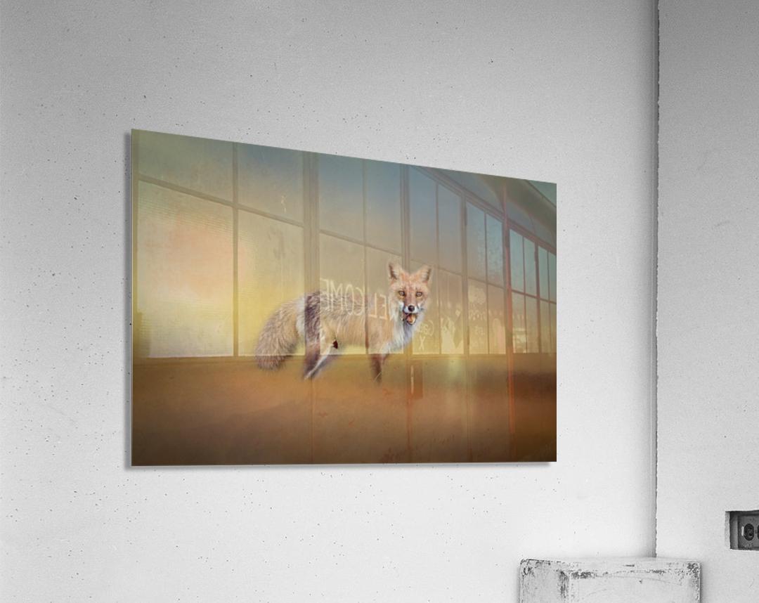 Foxy  Acrylic Print
