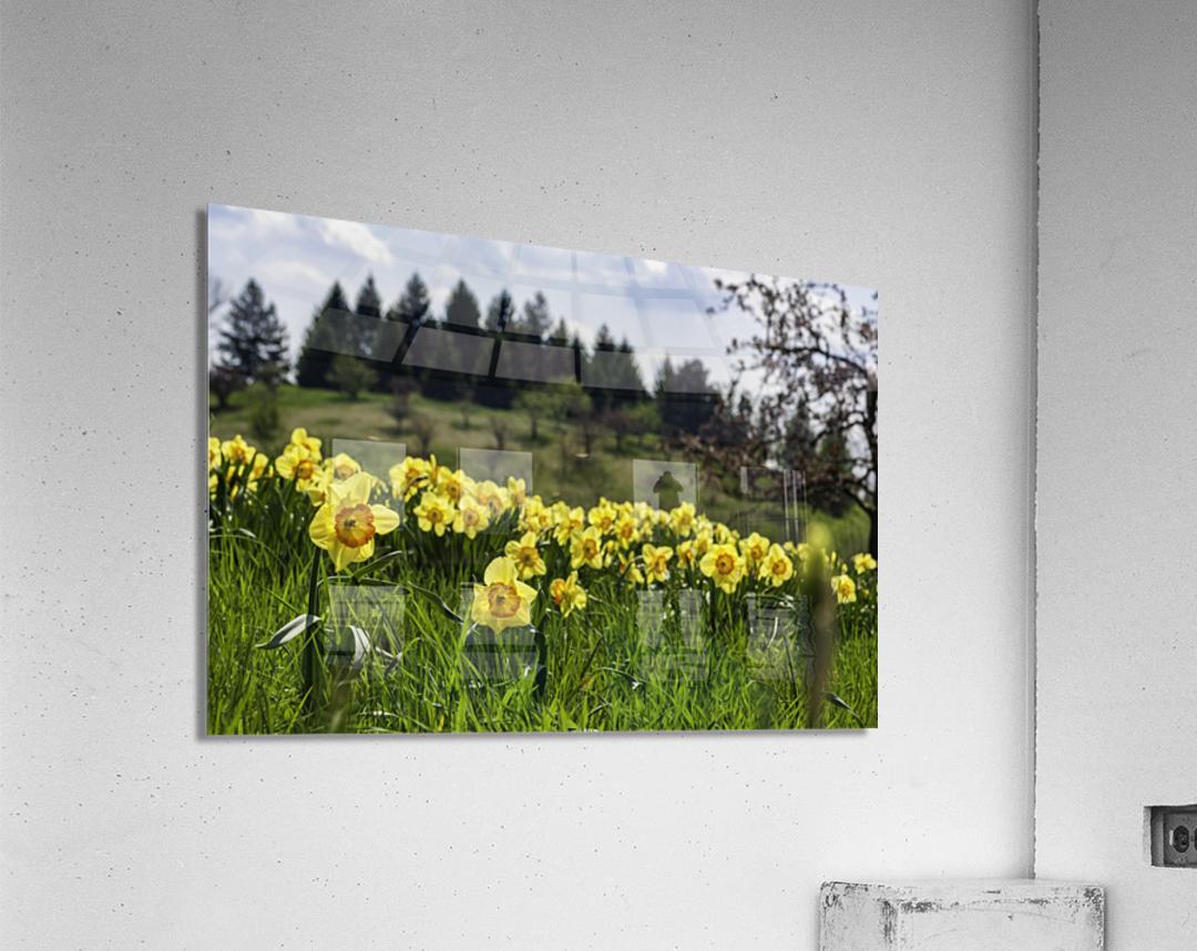 Flowers on the Hills  Acrylic Print