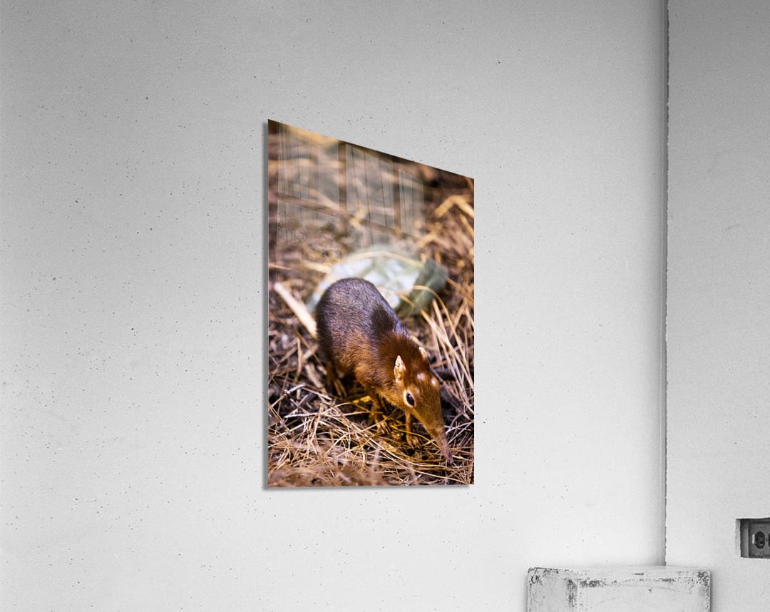 Small Elephant Mouse  Acrylic Print