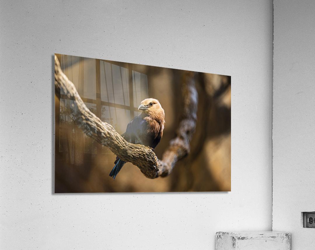 Perfect Pose  Bird   Acrylic Print