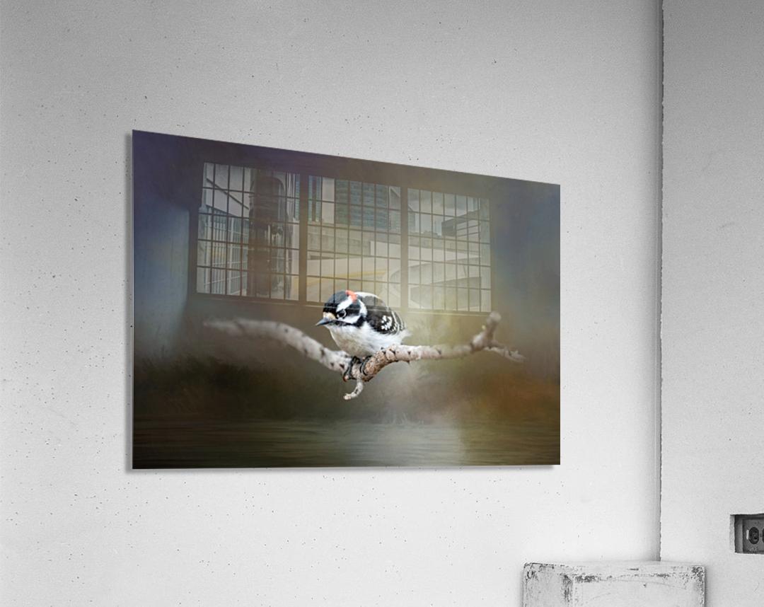 Mr Downy  Acrylic Print