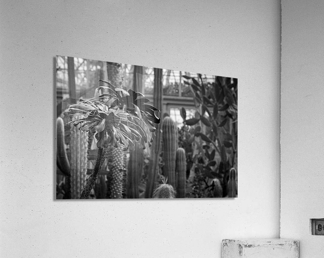 Desert in Black White  Acrylic Print