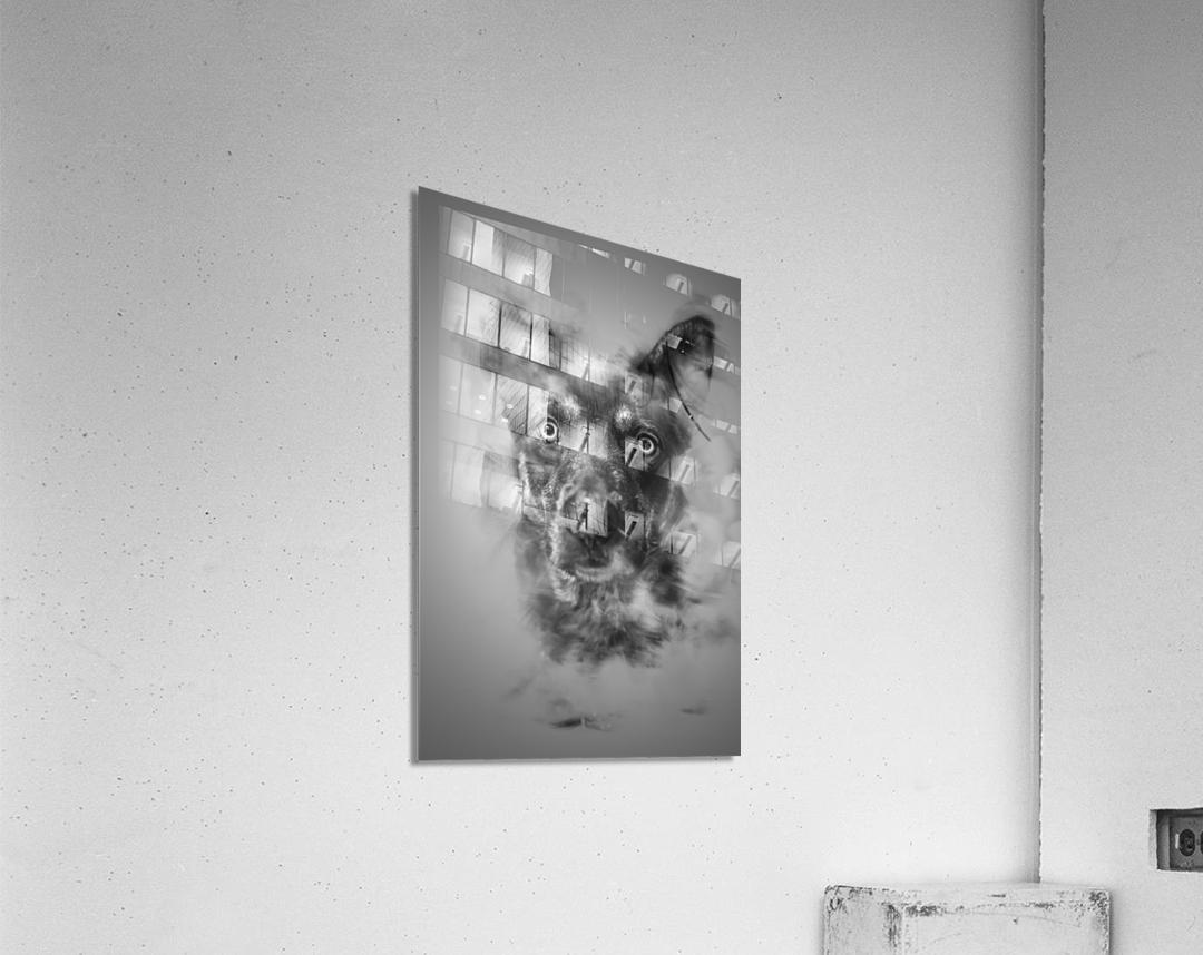 Chien  Acrylic Print