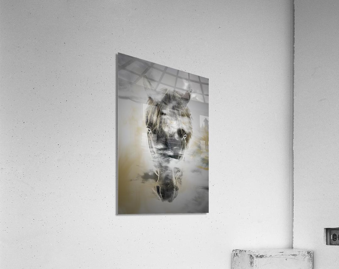 Cheval  Acrylic Print