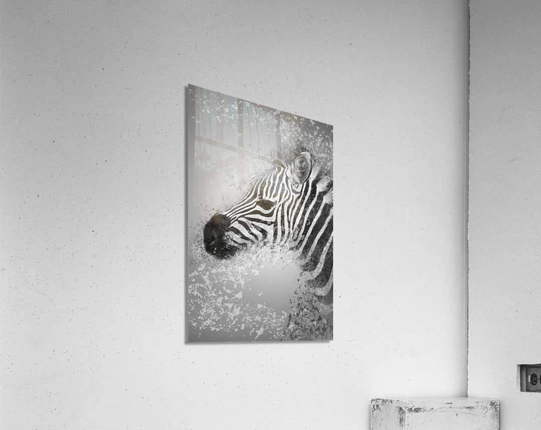 zebre 2  Acrylic Print