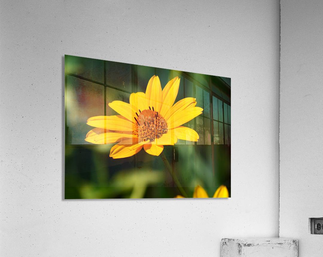 Sunny Side  Acrylic Print