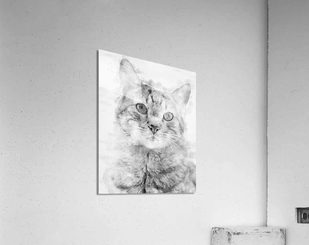 Kitten Noir  Acrylic Print
