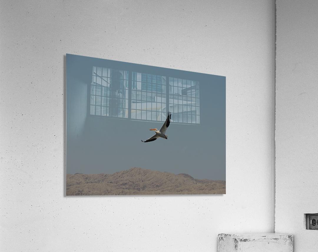 Soaring High  Acrylic Print
