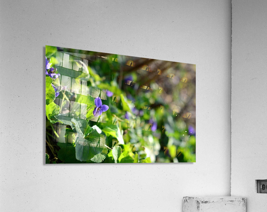 Spring sweet violets in the garden  Acrylic Print