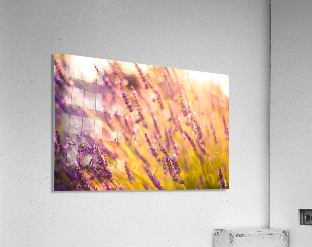 Sunset lavender flowers  Acrylic Print