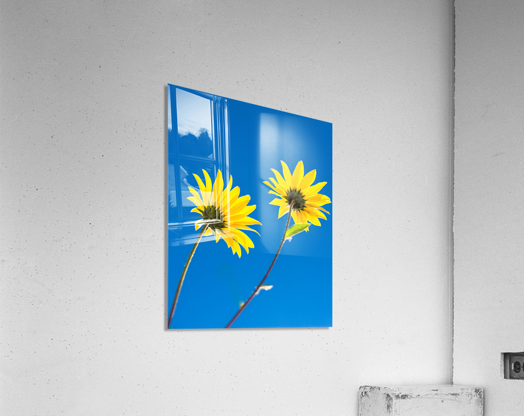Yellow flowers and blue sky  Acrylic Print