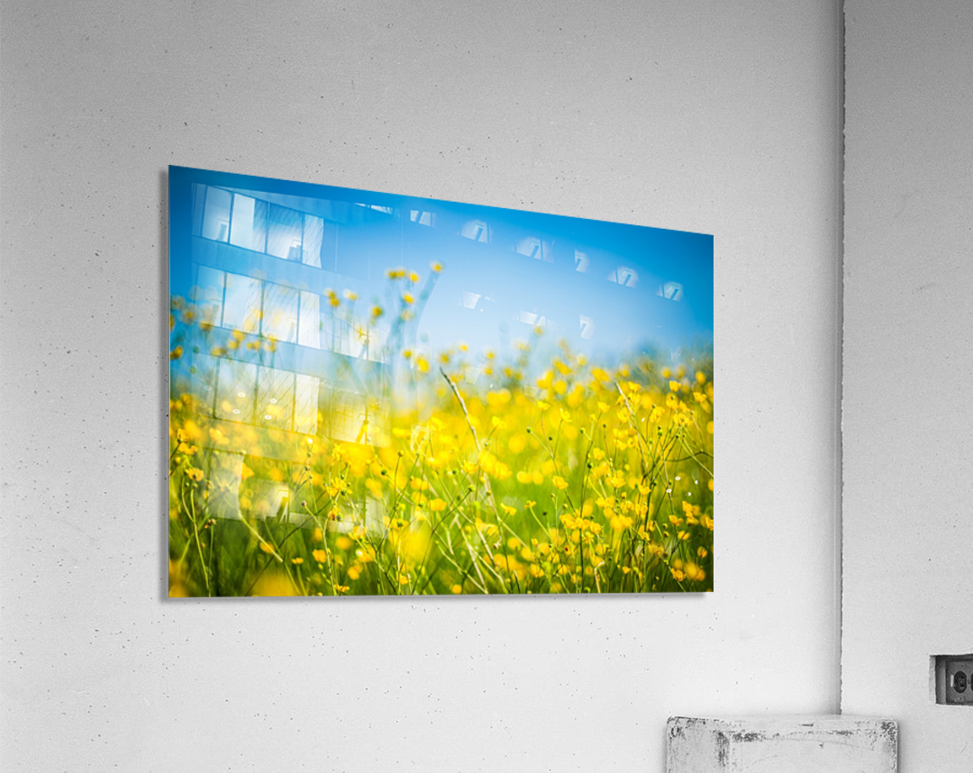 Summer flowers, yellow and blue  Acrylic Print