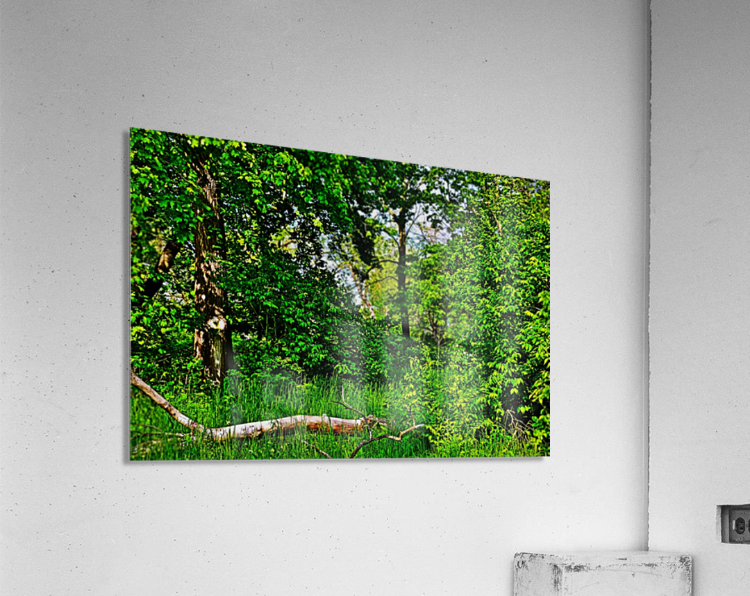 Life in the Shadows of the Trees  Acrylic Print