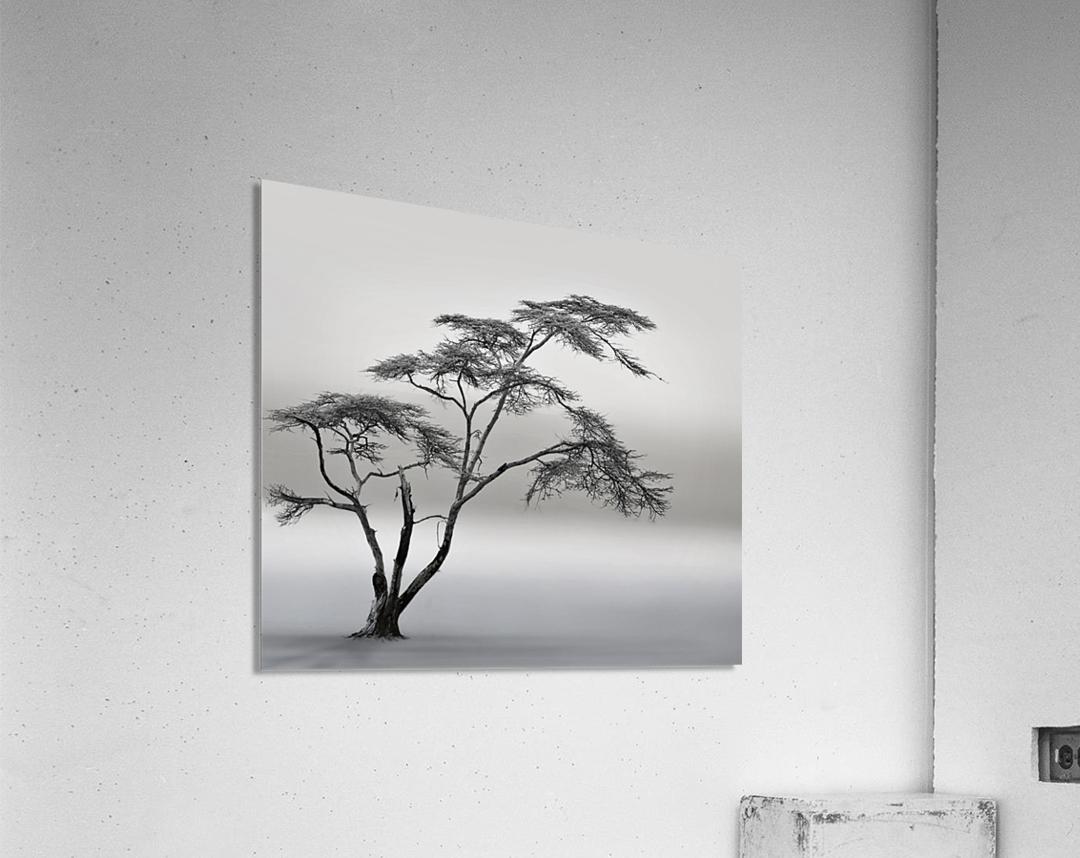 a very long story  Acrylic Print