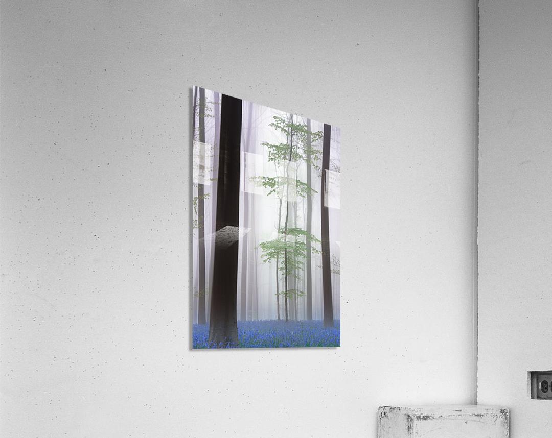 foggy forest ....  Acrylic Print