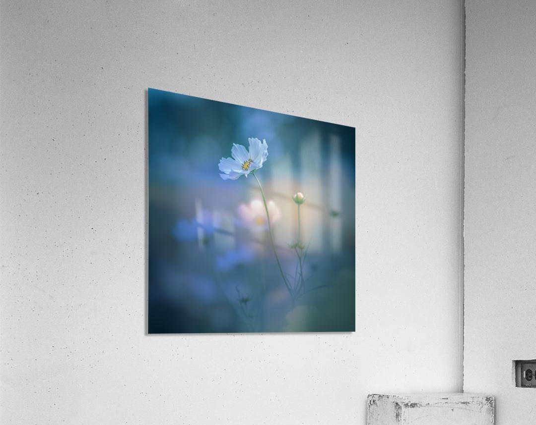 white shadow  Acrylic Print