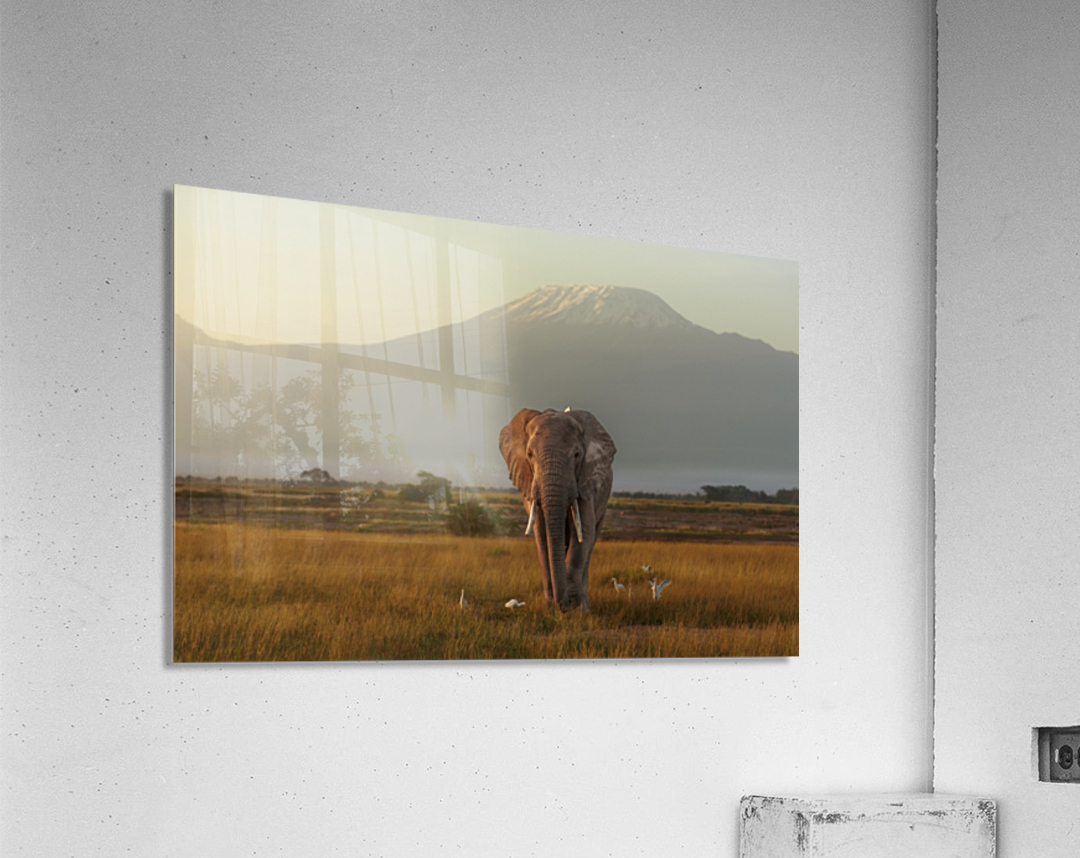 Under the roof of Africa  Acrylic Print