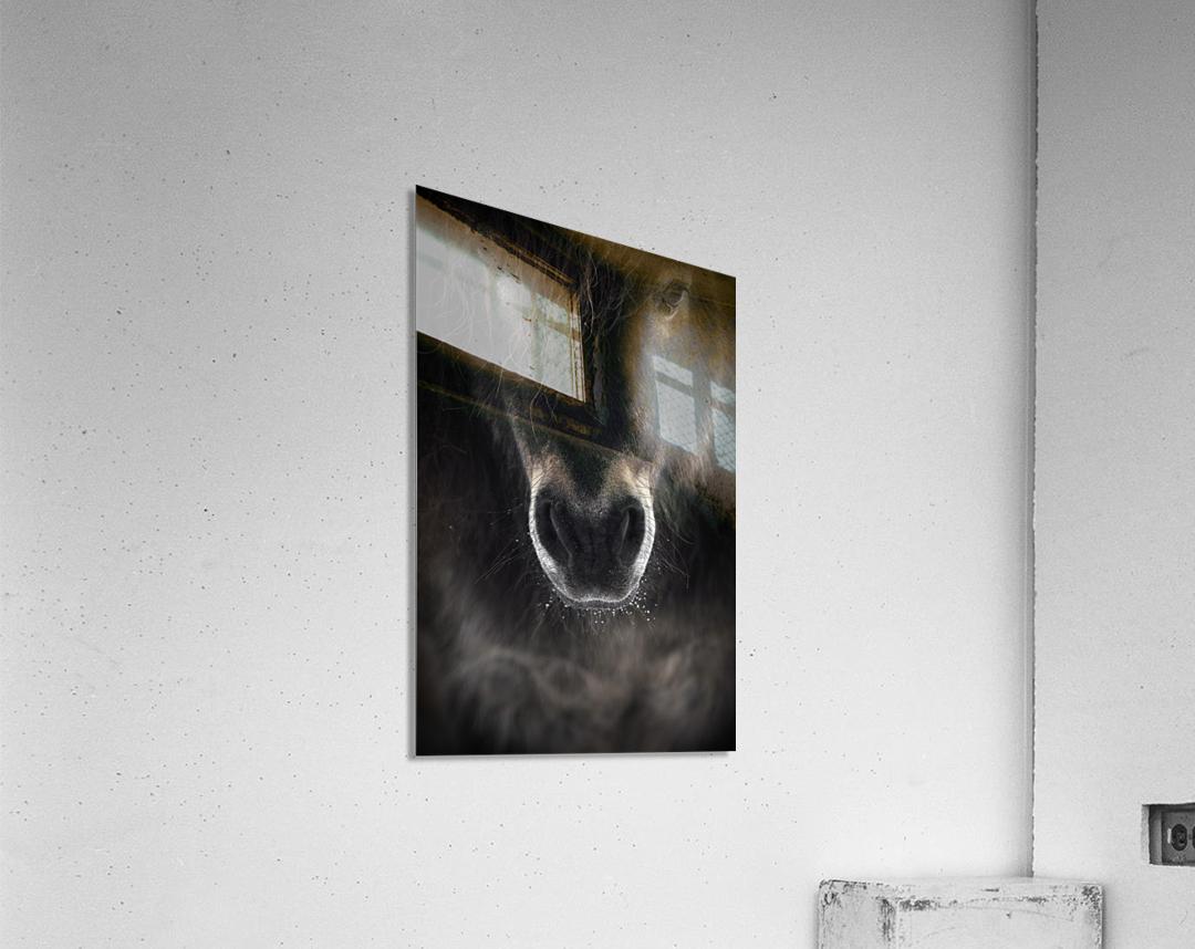 Ulysses  Acrylic Print
