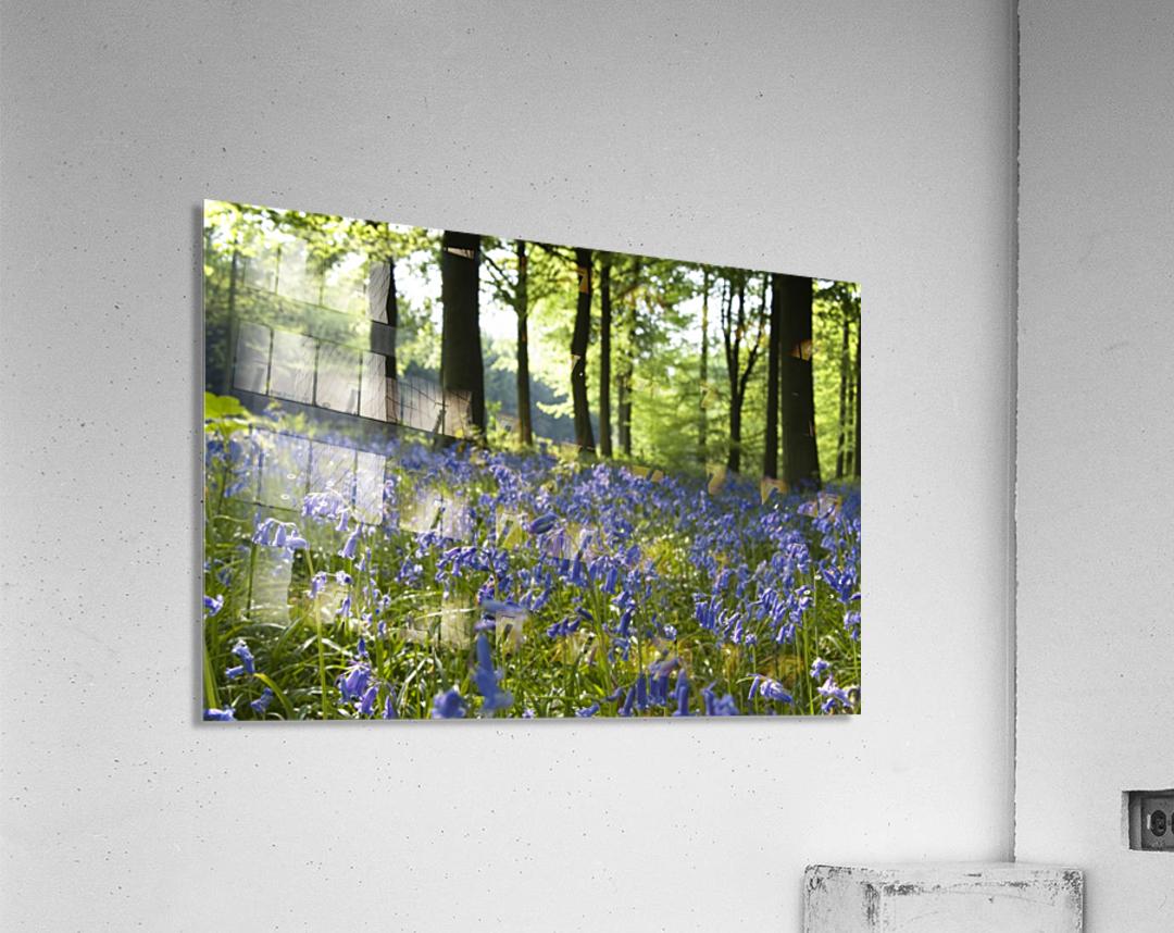 Bluebells On Forest Floor  Acrylic Print