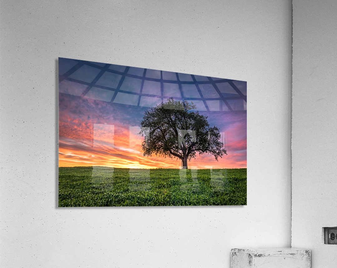 Lonely Tree at Sunset  Acrylic Print