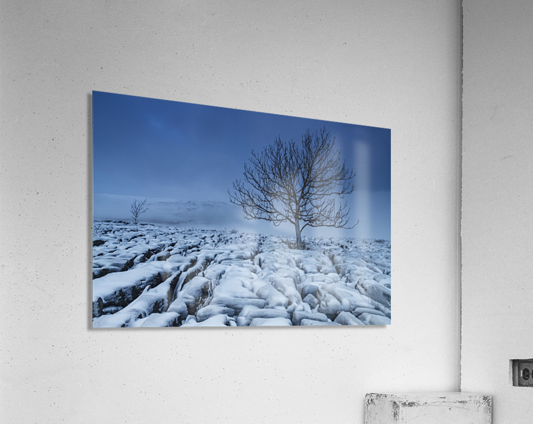 Cold Blue Trees, Yorkshire Dales, UK  Acrylic Print