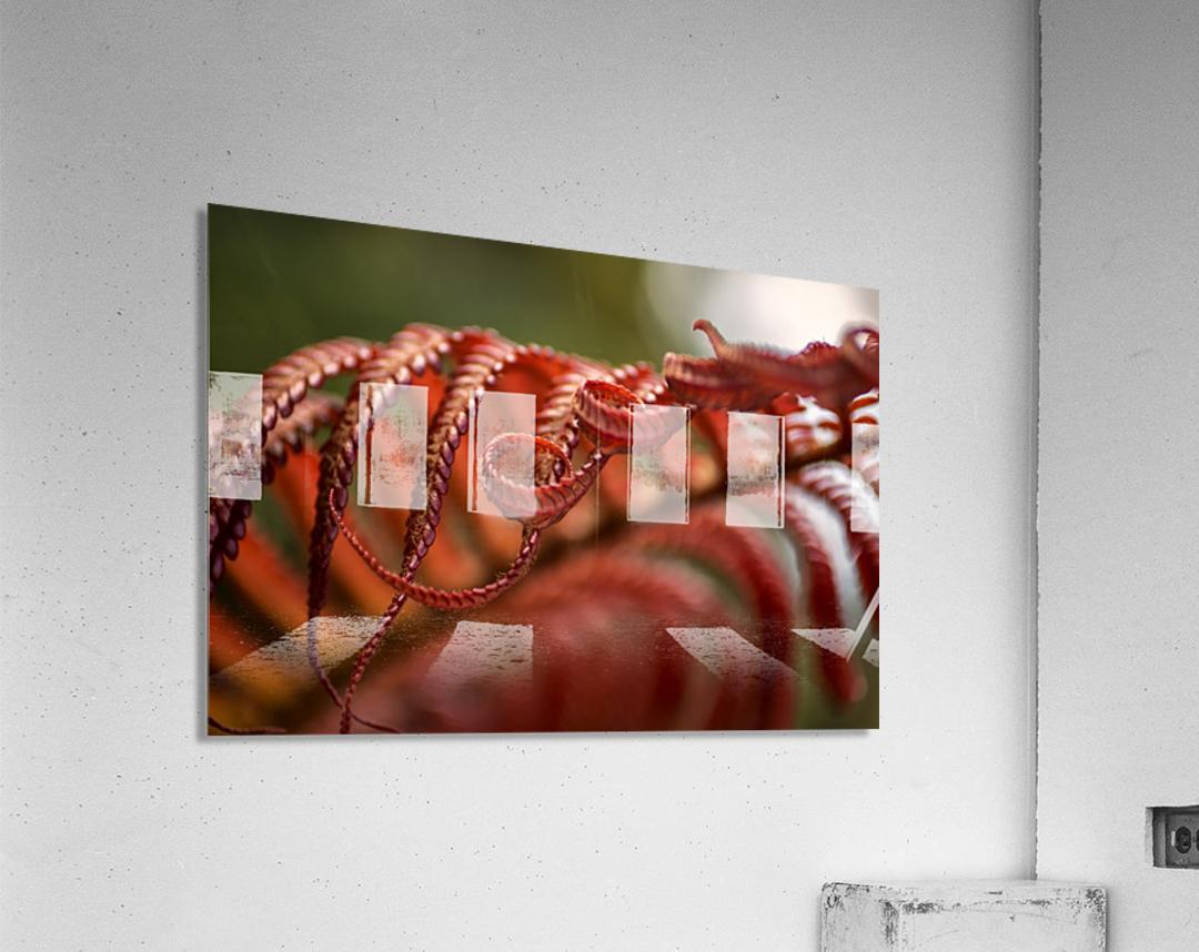Close up of a crimson Amau fern; Hawaii, United States of America  Acrylic Print