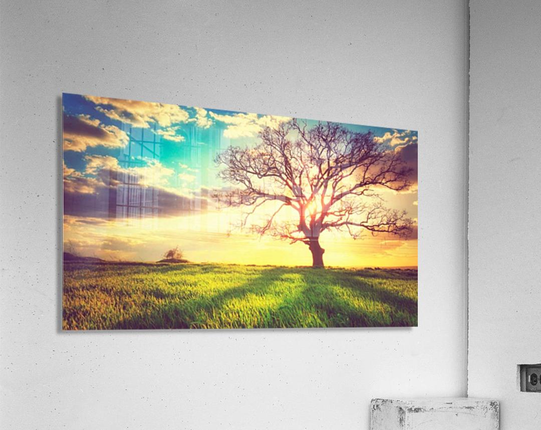 nature 05  Acrylic Print