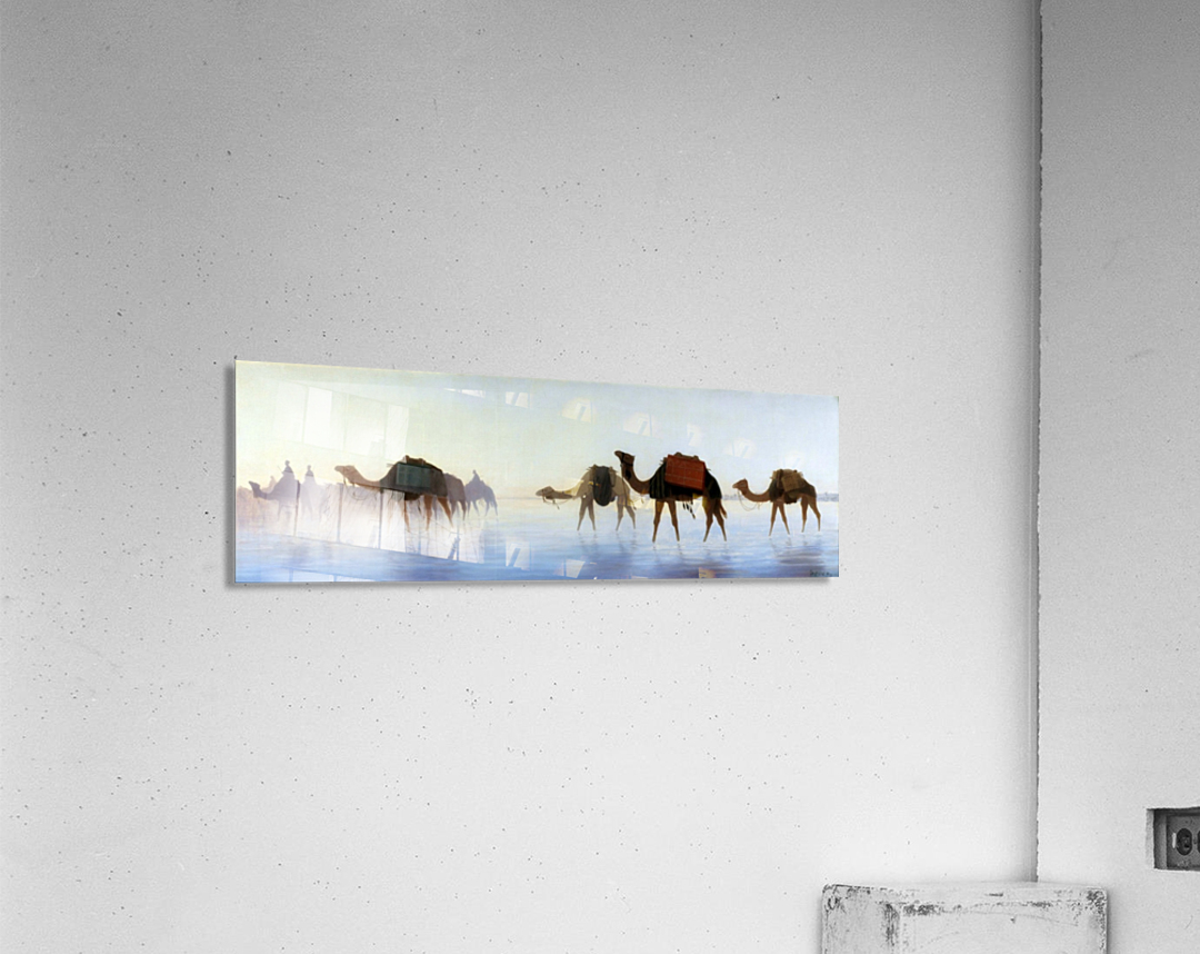 Camels crossing water  Acrylic Print