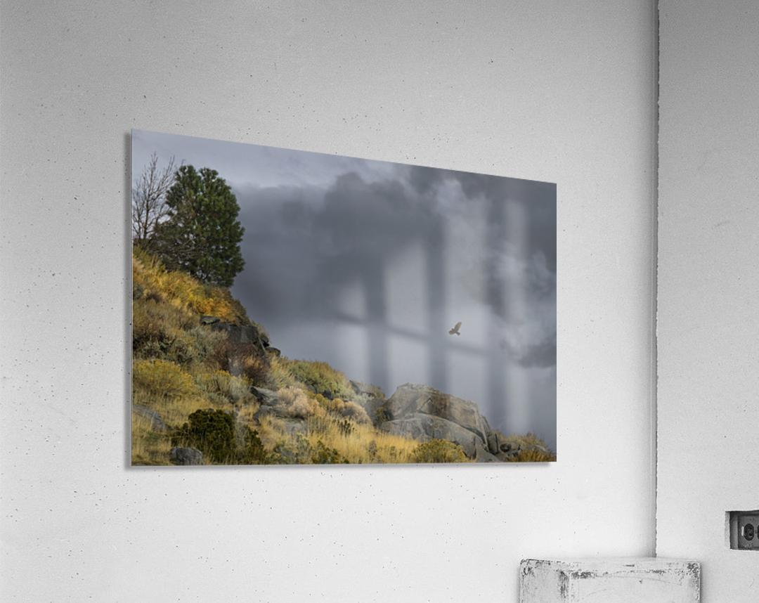 Desert Flyer  Acrylic Print