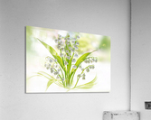 Lily of the valley  Acrylic Print