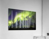 Aurora borealis over silhouetted trees; Alaska, United States of America  Acrylic Print