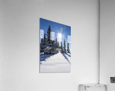 Snow covered evergreen trees on a snow covered hillside with blue sky and sun burst; Calgary, Alberta, Canada  Acrylic Print