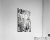 Illustration of a wolf and a mottled background  Acrylic Print