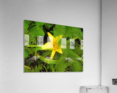 Yellow Flower  Acrylic Print